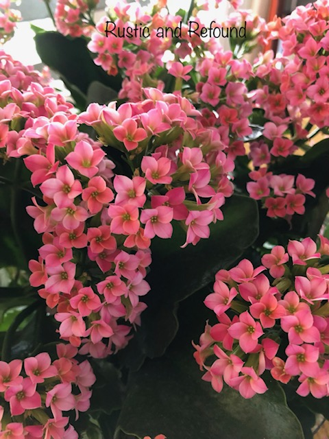 This image has an empty alt attribute; its file name is pink-blooms-2019.jpg